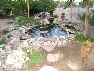 backyard turtle pond the turtle pond