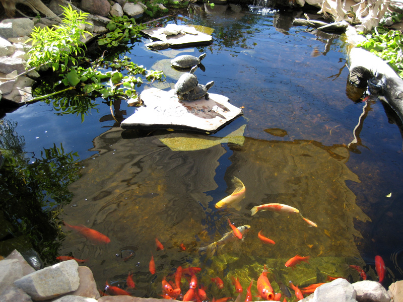 Above ground fish pond pics for Outdoor goldfish pond ideas